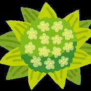 plant_fukinotou
