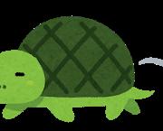 speed_slow_turtle